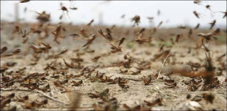 Locust_1594633334.jpg