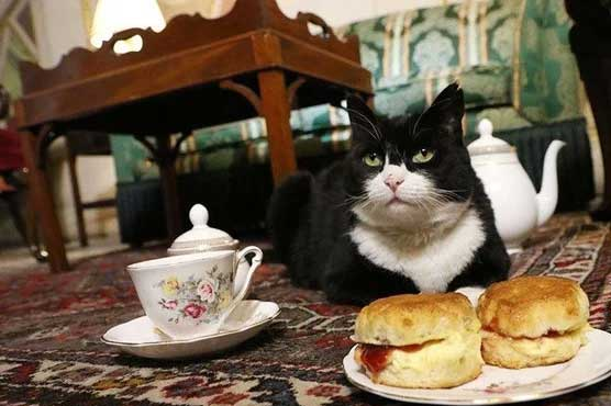 cat_1596895072.jpg
