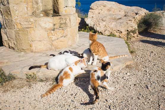 cat_1600680347.jpg