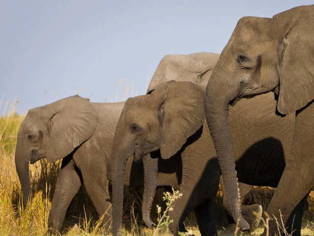 elephantmain_1634994453.png
