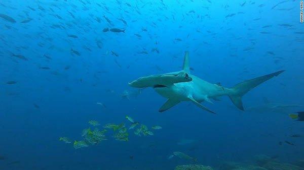 fish_1626679441.jpeg