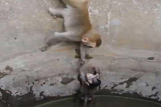 monkey_1605897790.jpg