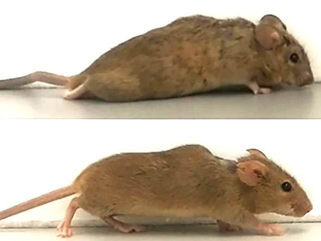 mouse_1611059264.jpg