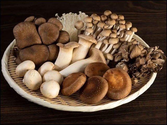 mushroom_1634909455.jpg