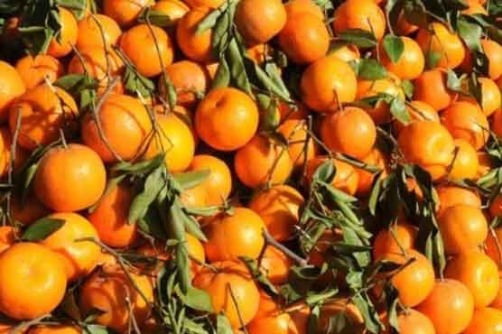 orange_1620411223.jpg